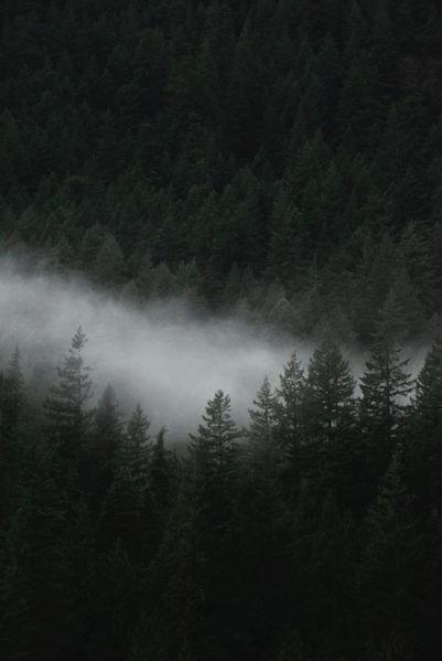 peinture argile forêt